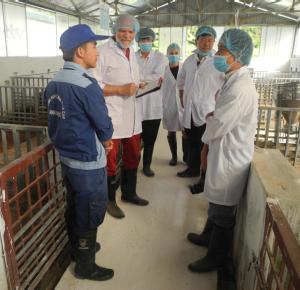 Ove på øko-svineproduktion