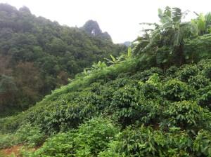s. 7. Afgrøder på bjergsider i CEMI- projektet forhindrer jordskred.