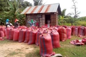 Risen bringes ind til lagring i risbanken i Thnal landsbyen,640x428